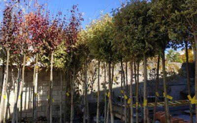 'Pistoletazo de salida' al 'II Plan Municipal de Arbolado', que incluye la plantación de cerca de 300 ejemplares en diversos puntos de la ciudad hasta finales de año