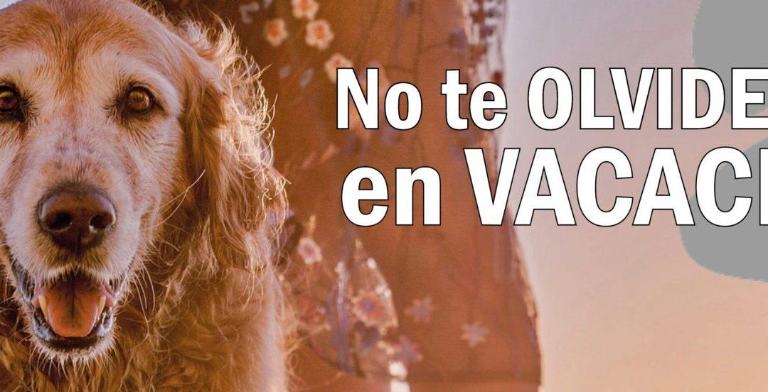 El Ayuntamiento de San Fernando de Henares emprende una campaña contra el abandono animal